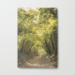 Tunnel of Trees Summer Series #3 Metal Print