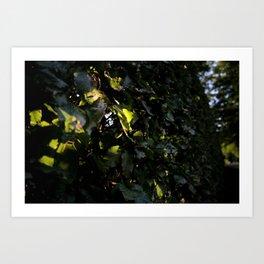 light through the leaves Art Print