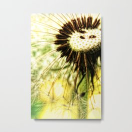Dandelion 7 Metal Print