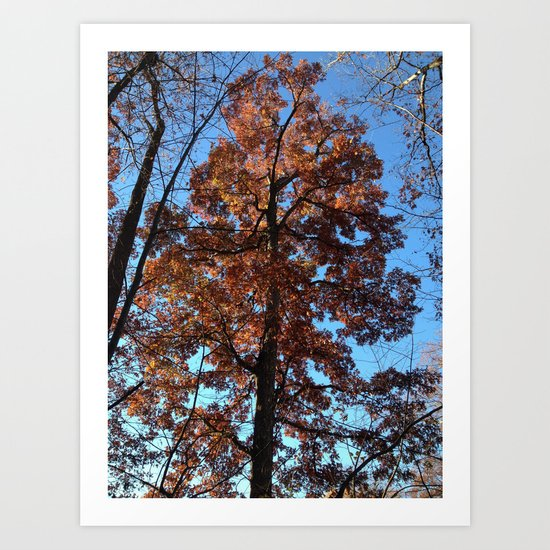 Oak Tree at Dawn Art Print