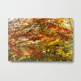Forest foliage in Autumn Metal Print