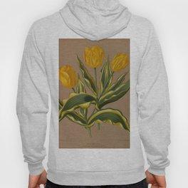 Arendsen, Arentine H. (1836-1915) - Haarlem's Flora 1872 - Single Early Tulips 6 Hoody