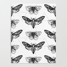 Geometric Moths Poster