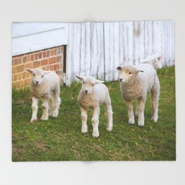 3 Little Lambs Throw Blanket