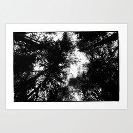 NORWEGIAN FOREST II Art Print