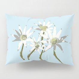 Flannel Flowers Actinotus helianthi Pillow Sham