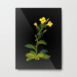 Mary Delany Botanical Vintage Flower Floral Collage Oenothera Biennis Metal Print
