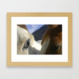 Horse Photo Framed Art Print