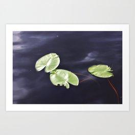 Waterlily pads Art Print