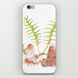 Banksia's iPhone Skin