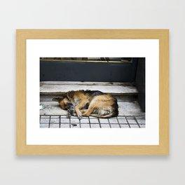 Let Sleeping Dogs Lie Framed Art Print