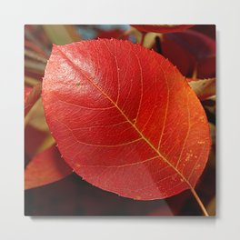 Autumn coppery red Juneberry berry leaf Metal Print