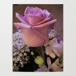 A Joyful Occasion Pink Rose Poster