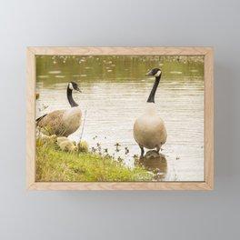 Nature wildlife family of ducks Framed Mini Art Print
