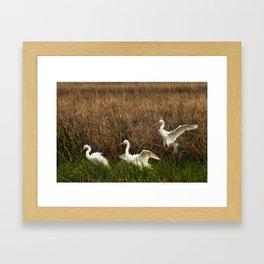 Egret Landing Framed Art Print