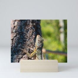 As the lava lizard lazes about Mini Art Print