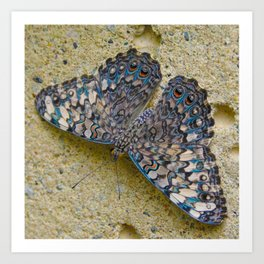 Turquoise and Sand Butterfly by Teresa Thompson Art Print