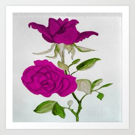 Magnificient Rose Art Print