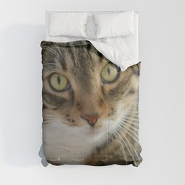 Kitty Cutie Pie Comforters