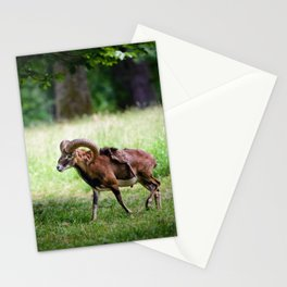 Your World III Stationery Cards