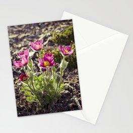 Pulsatilla vulgaris in garden Stationery Cards