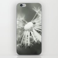 dandelion iPhone & iPod Skins featuring dandelion by Falko Follert Art-FF77