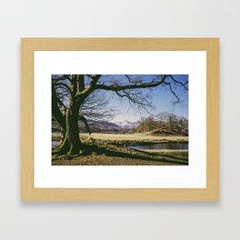tree over langdale pikes. elterwater, lake district, uk Framed Art Print