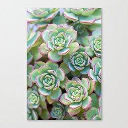 Green grass pattern Canvas Print