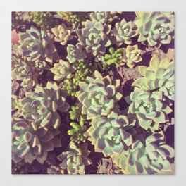 Small Succulents Canvas Print