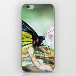 Black and Yellow Butterfly iPhone Skin