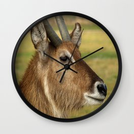 Elk photography Wall Clock