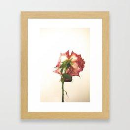 Post-rose Framed Art Print