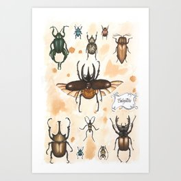 Beetles study Art Print