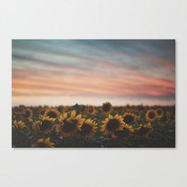 Oahu's Sunflowers Canvas Print
