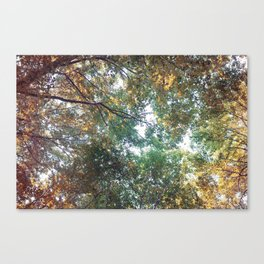 Forest 011 Canvas Print