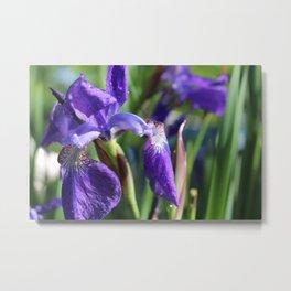 Morning dew on Iris Metal Print