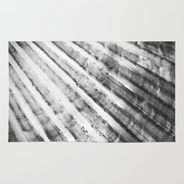 Seashell Up Close - The Peace Collection Rug