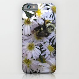 Queen Bumblebee White Aster iPhone Case