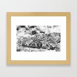 Crocodilefish Framed Art Print