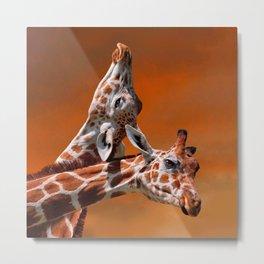 Giraffes couple in love Metal Print