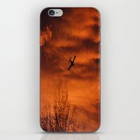 plane iPhone & iPod Skins featuring Plane by Fox Industries