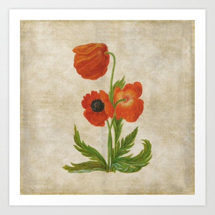 Vintage painting bunch of poppies poppy flower floral art print by vintage painting bunch of poppies poppy flower floral art print mightylinksfo