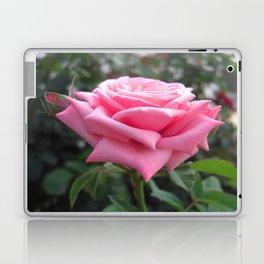 Pink Roses in Anzures 6 Laptop & iPad Skin