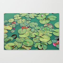 Serene Green Waterlily Canvas Print