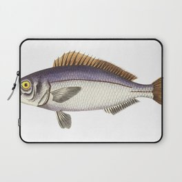 Banded anthias or Banded Perch  from The Naturalists Miscellany (1789-1813) by George Shaw (1751-181 Laptop Sleeve