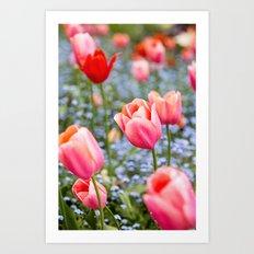 Keukenhof Tulips - Amsterdam Art Print