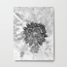 Monochrome alpine flower macro photography Metal Print