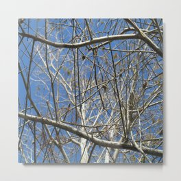 Crisp Cold Florida Morning Metal Print