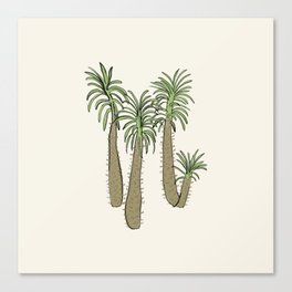 madagascar palm Canvas Print