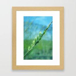 willow catkin Framed Art Print